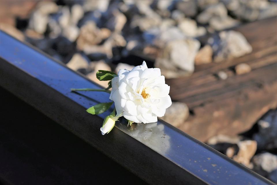 https://www.educfrance.org/wp-content/uploads/2020/01/stop-children-suicide-2462773_960_720.jpg