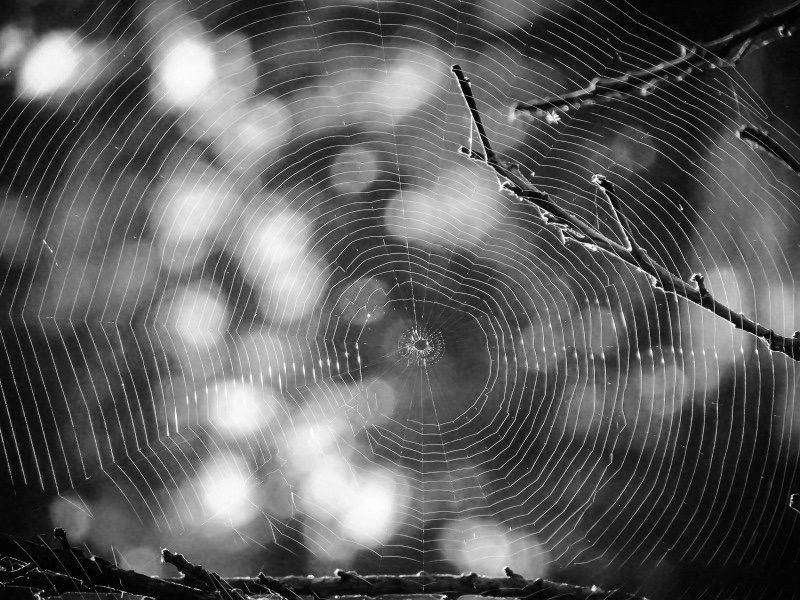https://www.educfrance.org/wp-content/uploads/2020/02/spiderweb-web-spider-tree-trap-nature-cobweb.jpg